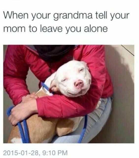 Animals Too Have Unresolved Issues With Their Mom (Memes)
