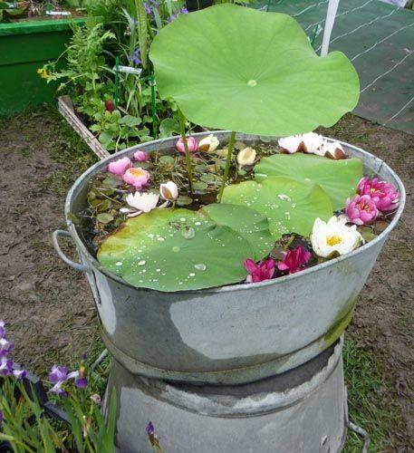 petits bassins fleuris dans mon jardin il y aurait. Black Bedroom Furniture Sets. Home Design Ideas