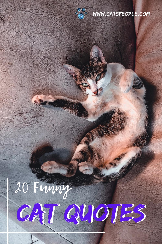 20 Funny Cat Quotes In 2021 Cat Quotes Cat Quotes Funny Cats