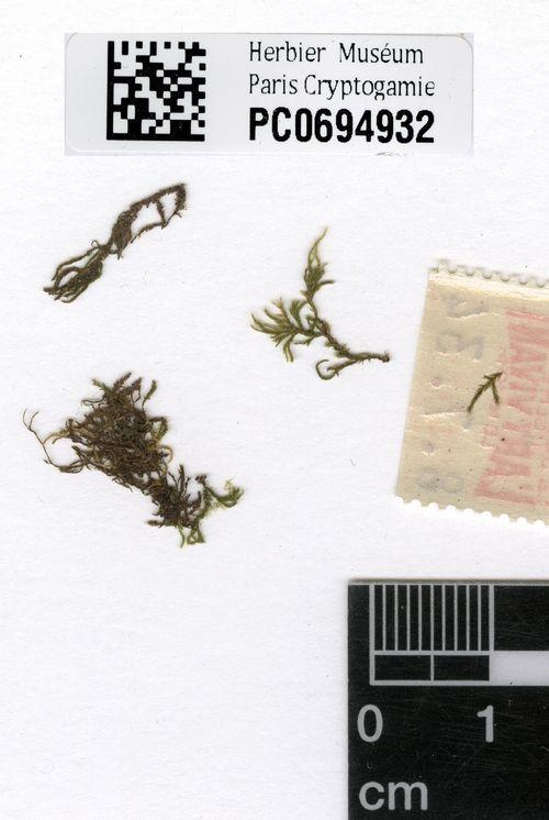 Occurrence Detail 1019533131  South America/서식지가 수년에 걸쳐 경작화 되어 사라짐