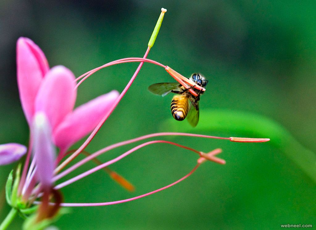 100 Beautiful Macro Photography examples and ideas. Read full article: http://webneel.com/macro-photography-ideas | Follow us www.pinterest.com/webneel