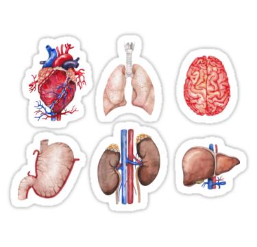 Human Anatomy Sticker Set FREE GIFT Pack of 9 Stickers