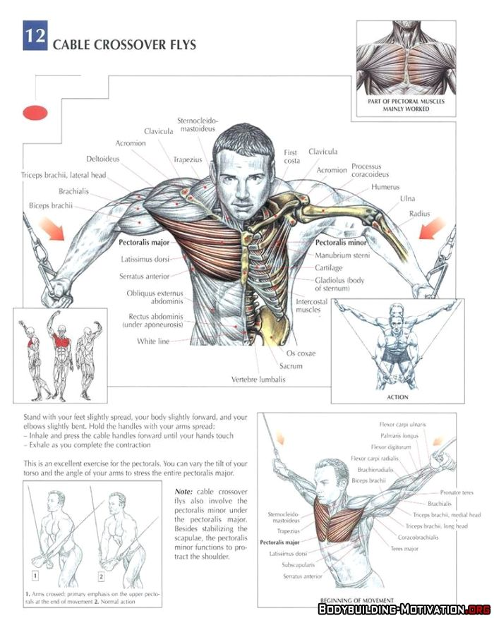 standing cable crossover - Google Search | fittness | Pinterest ...