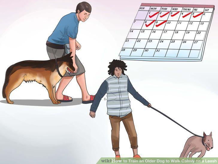 Train An Older Dog To Walk Calmly On A Leash Big Dogs Training