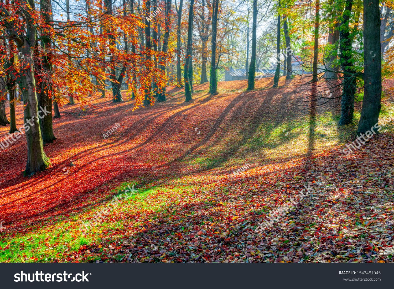 Romantic fall colored park with trees and morning sunlight. Autumn season natural background. Fall concept in park. Vivid colorful natural scene. Europe #Ad , #Sponsored, #morning#trees#Autumn#sunlight