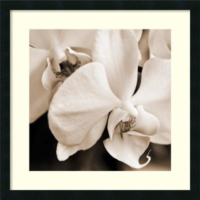 Amanti Art 'Timeless Love I' by Jennifer Broussard Framed Photographic Print