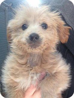 Grafton Wi Retriever Unknown Type Mix Meet Sponsor Foster Flip A Puppy For Adoption Http Www Adoptapet Com Pet 1 Puppy Adoption Kitten Adoption Pets
