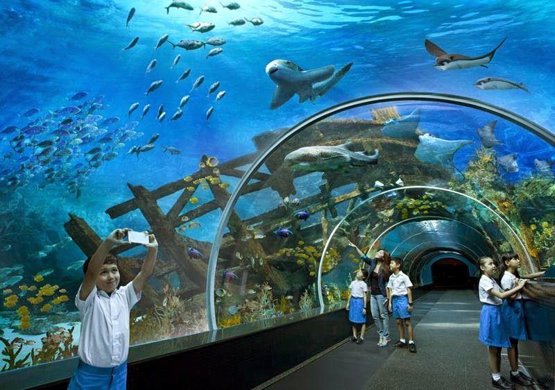 Sea Aquarium The World S Largest