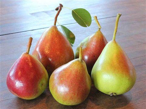 European Pear - NORTHBRITE – Green Barn Farm