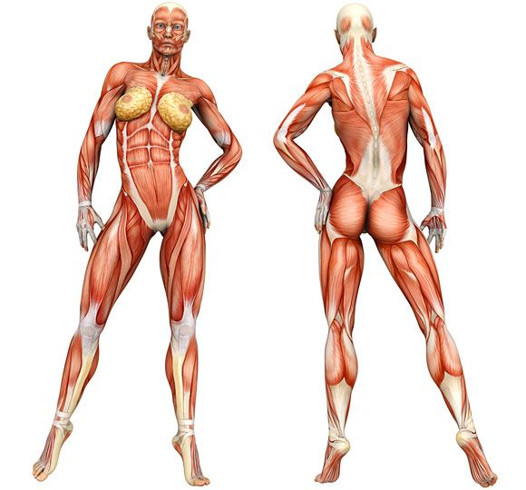 GOOD -> Best Exercises for Men & Women (you can click on the body ...