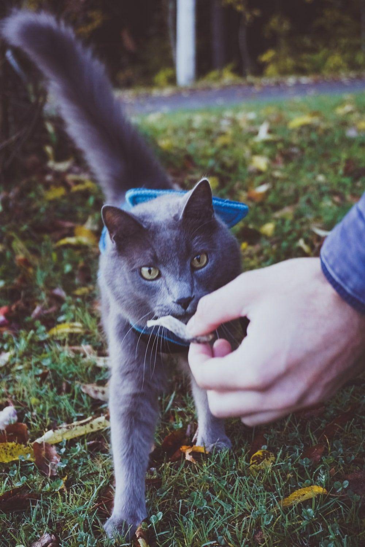 Pure Vita FreezeDried Cat Treats by NutriSource (Review