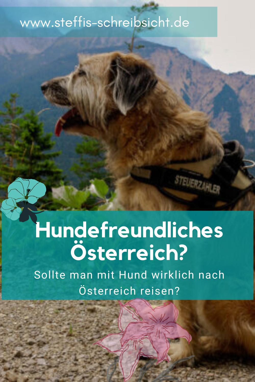 Hundefreundliches Osterreich In 2020 Hunde Freundlich Osterreich