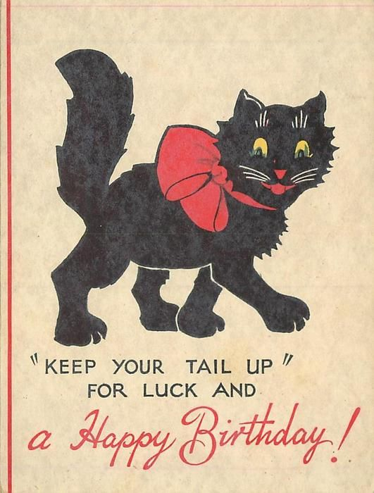 Keep Your Tail Up For Luck And A Happy Birthday Vintage Cat Postcard