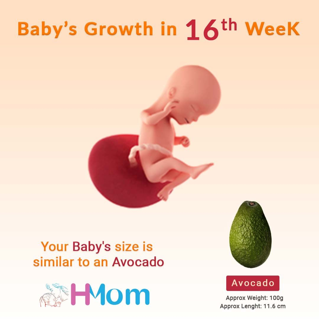 Week 16 is mid of the 4-month pregnancy  It's an important