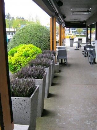 Greenscape Design Exterior Concrete Patio Planters With Black Grass