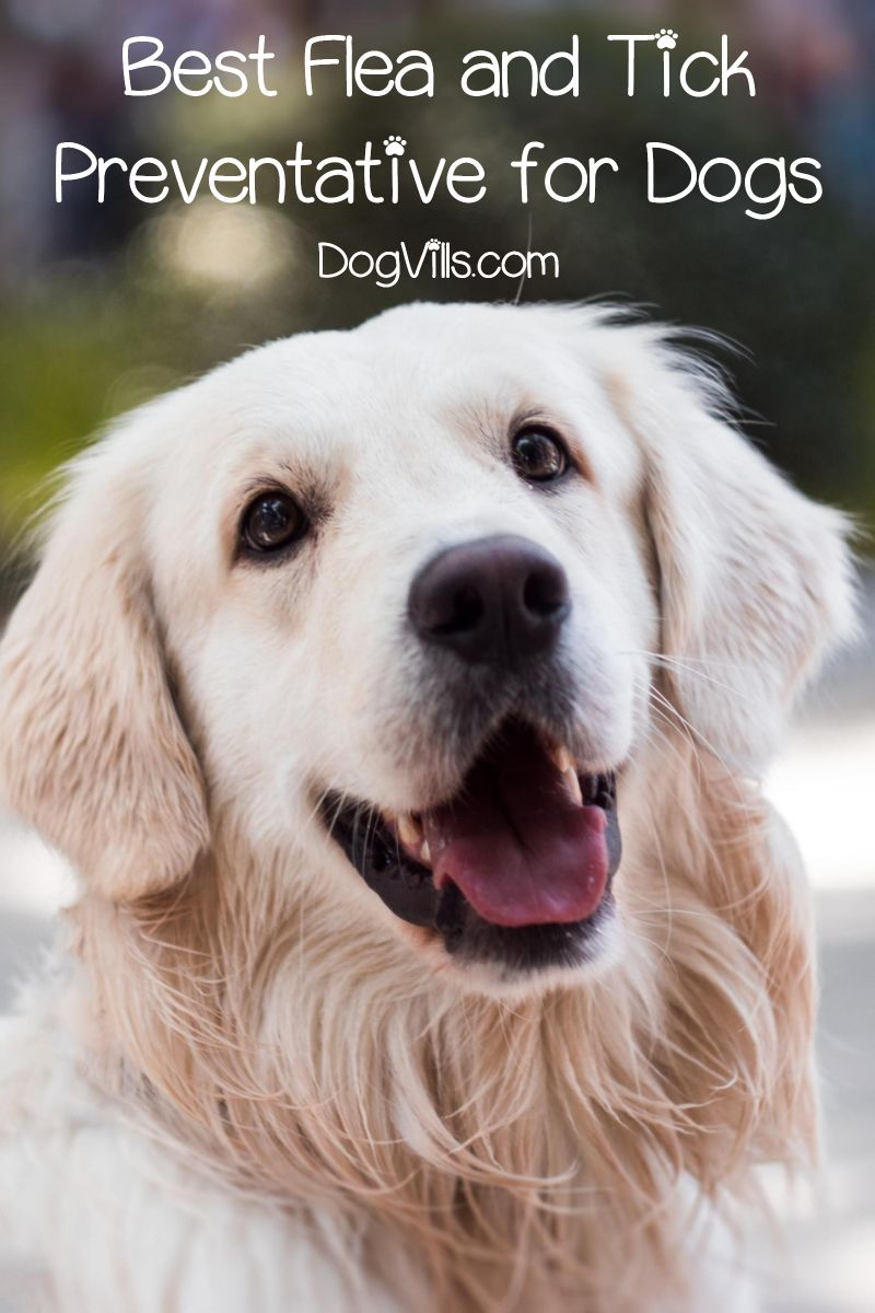 What Is The Best Flea And Tick Preventative For Dogs Best Dog