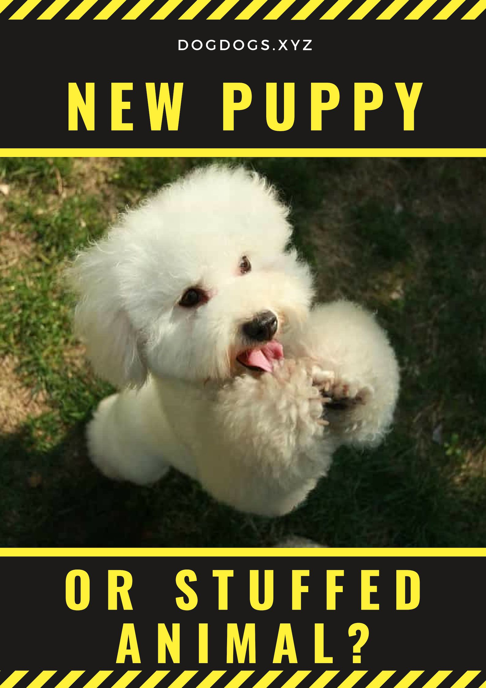 New Puppy Or Stuffed Animal New Puppy Animals Puppies