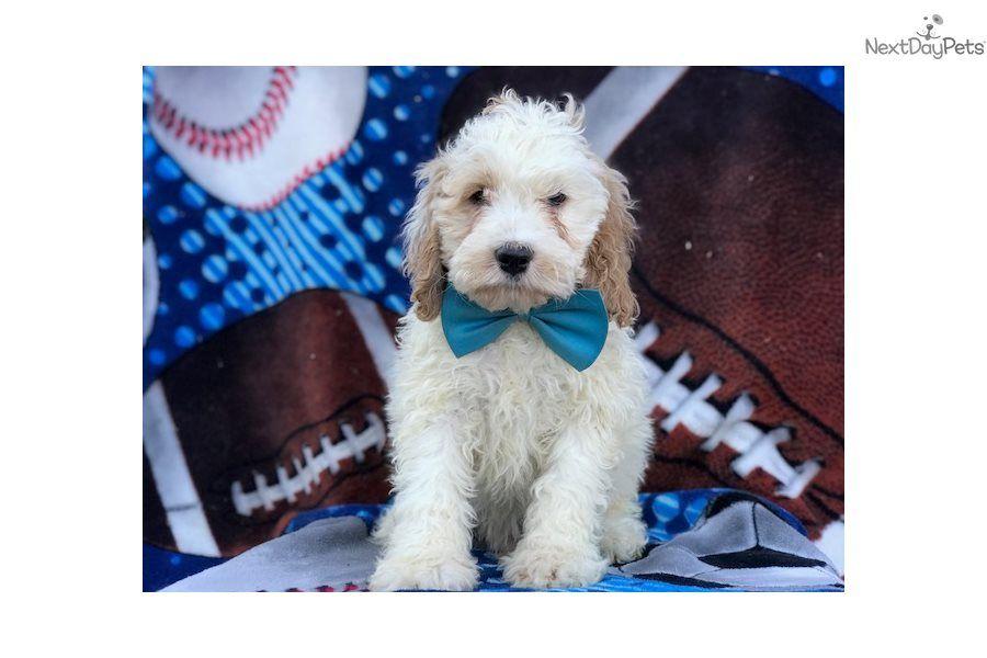 Park Art|My WordPress Blog_Chiweenie Puppies For Sale Texas
