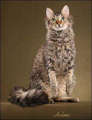 Curly cat! Gw banget :p