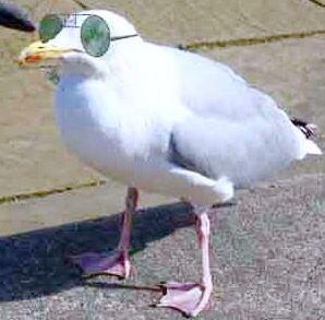Bird in glasses