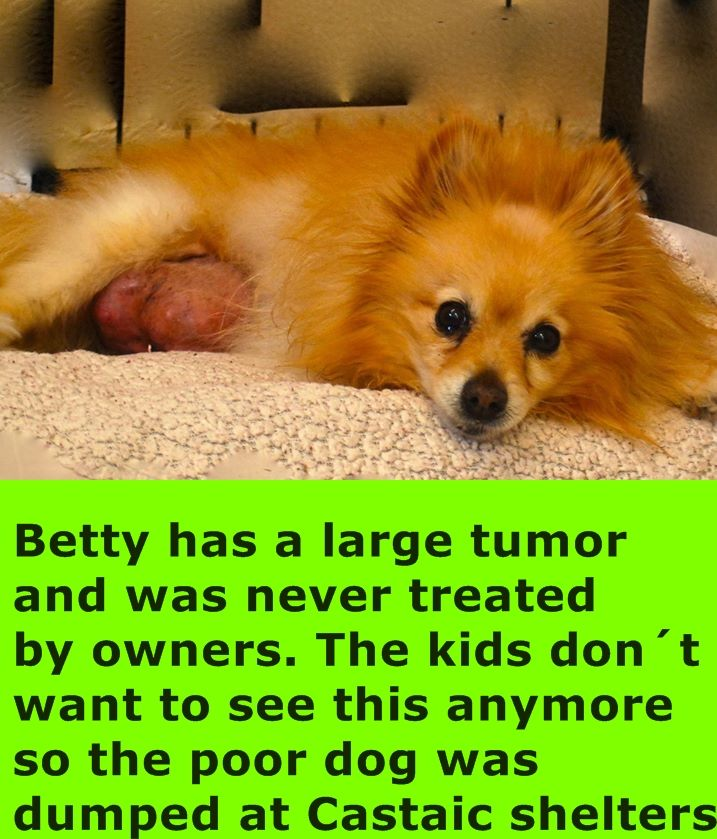 Adopted Dumped With Massive Tumor Betsy Was Surrendered To Castaic Animal Care Because Th Tiere Geliebt Werden
