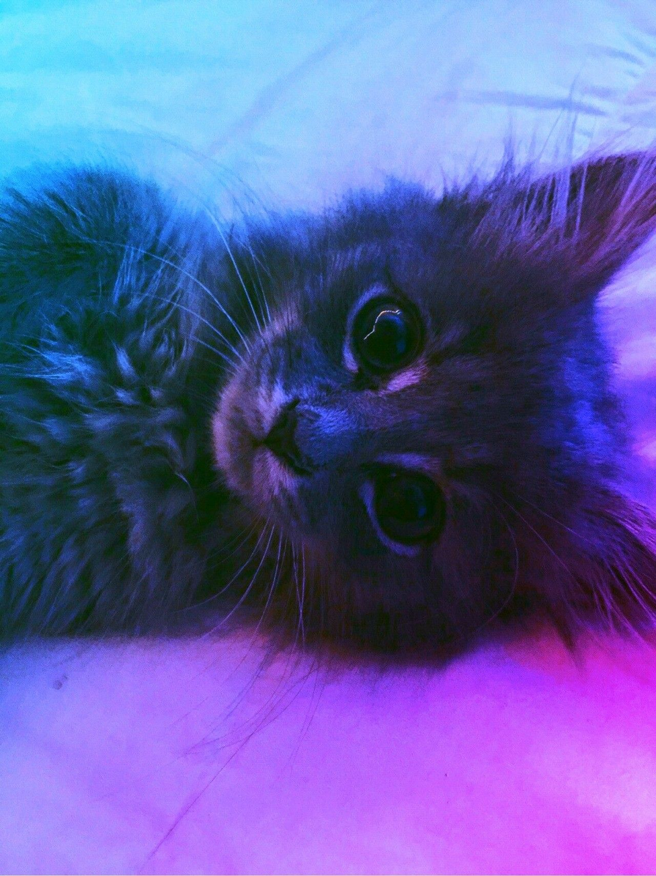 Pin by Jason Buckley on Animals Cat aesthetic, Crazy