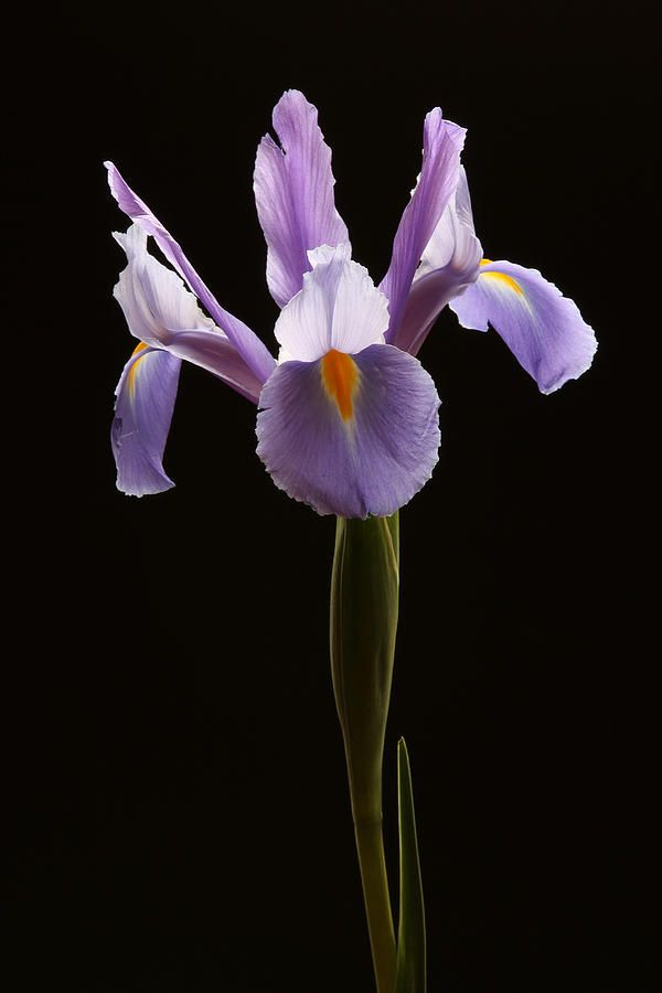 Elegance By Juergen Roth Macro Photography Flowers Beautiful Flowers Pretty Flowers