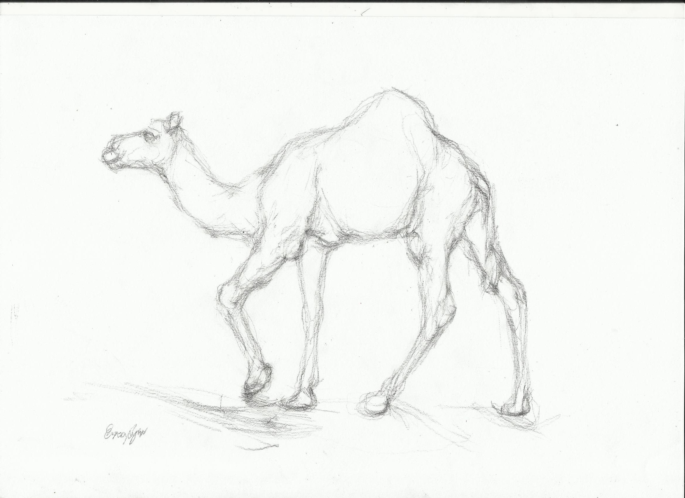 artists drawings of camels tag archives camel drawing camels