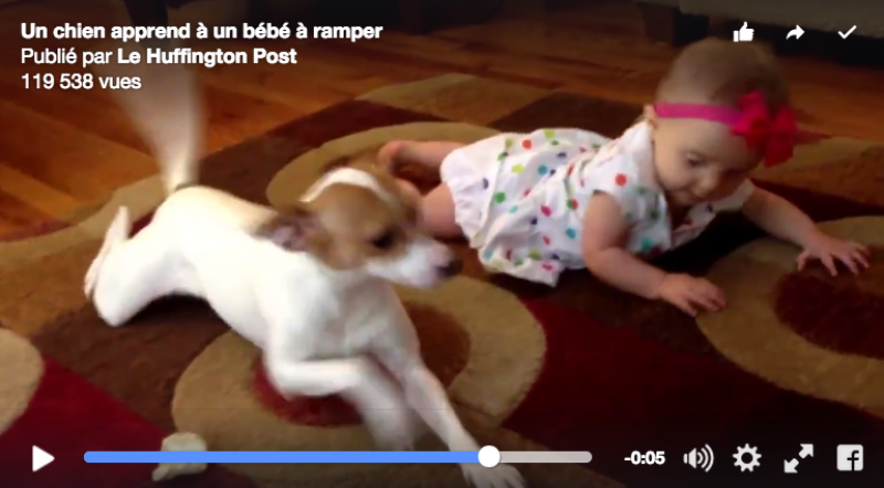 Un chien montre au bébé comment ramper
