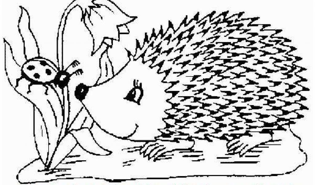 Ausmalbilder Herbst 14 Ausmalbilder Herbst Igel Einzigartig Ausmalbild Igel Neu Malvorlagen Fur Igel Ausmalbilder Her In 2020 Ausmalen Ausmalbilder Bilder Zum Ausmalen