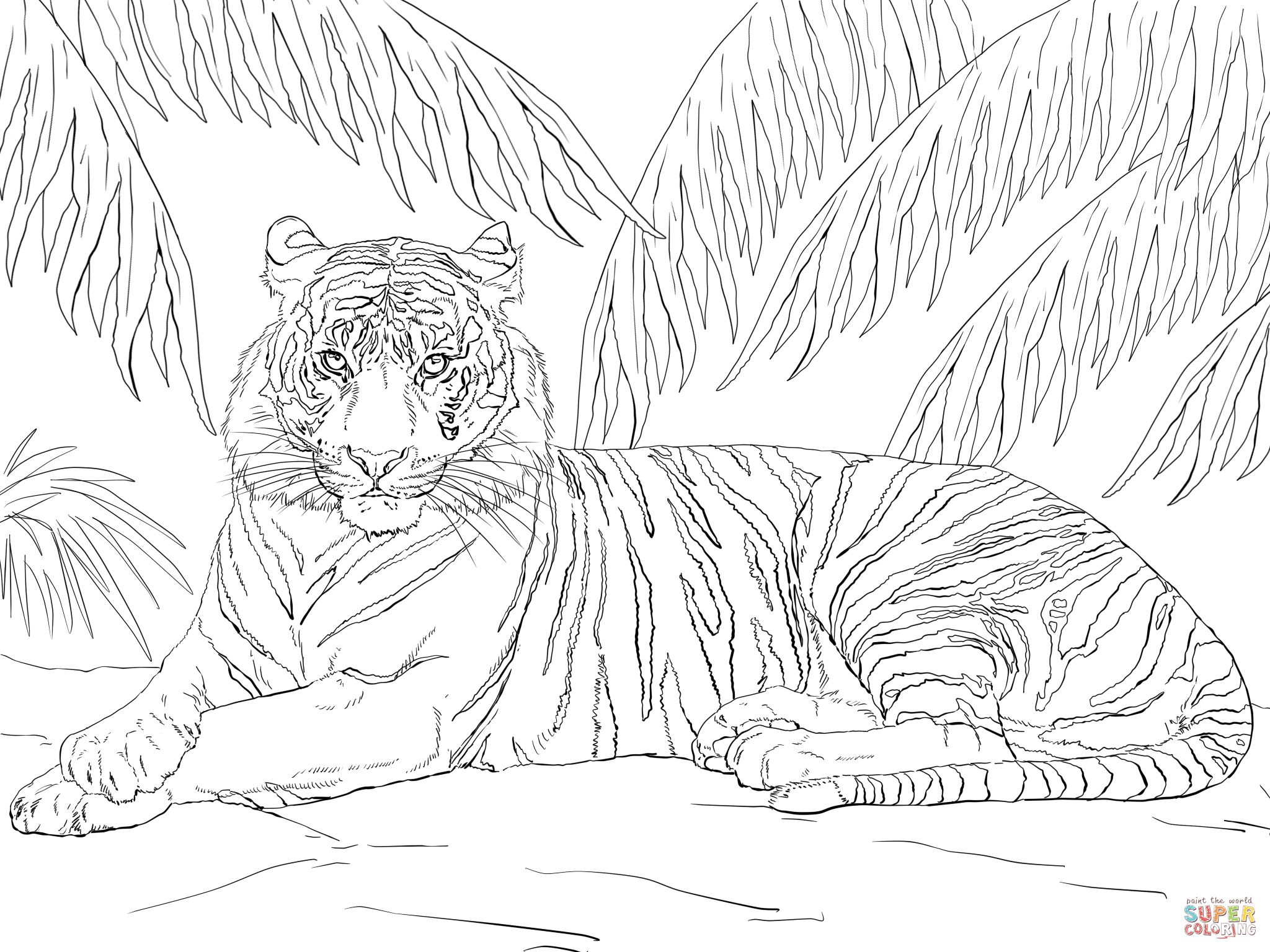 Sumatran Tiger Laying Down Animal Coloring Pages Farm Animal Coloring Pages Cat Coloring Page