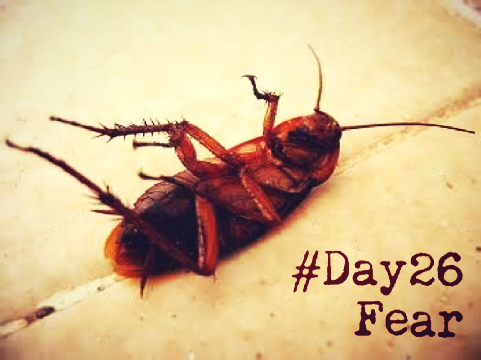 30dayschallenge Day26 Fear Katsaridaphobia The Fear Of Cockroach Es Apalagi Kalo Udah Terbang Ala Ala Roaches Pest Control Cockroaches