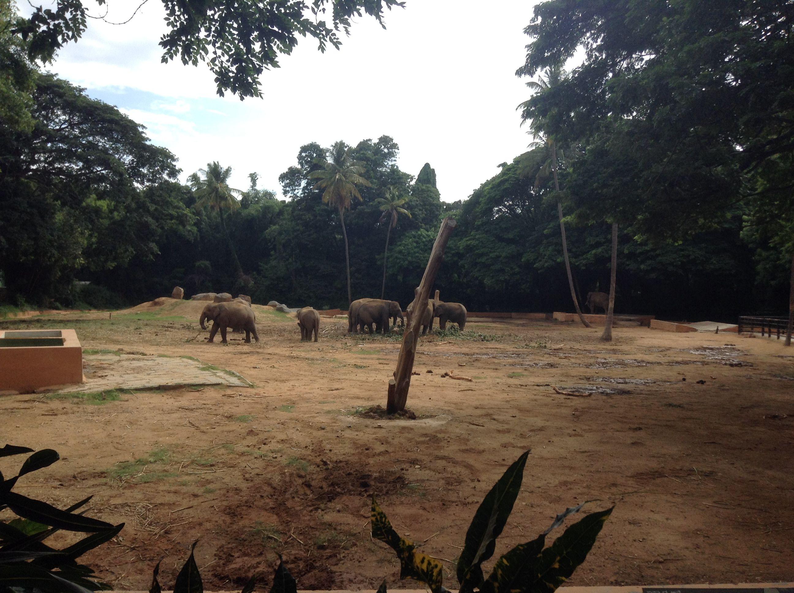 4cb05f292ec492ab94beb5e9600c45d8 - Mysore Zoo Sri Chamarajendra Zoological Gardens