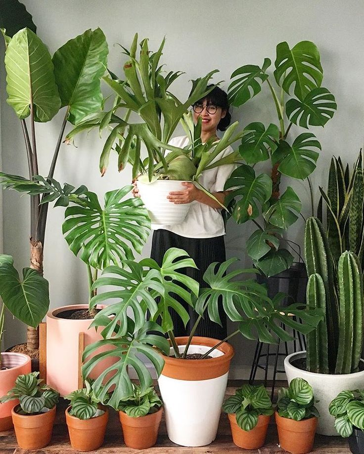 "House of Many Plants on Instagram: ""Life is good with plants -   14 planting Indoor photography ideas"