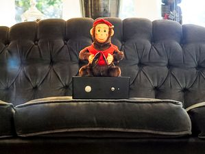 Monkey Couch Guardian... Brilliant! Good For Keeping Cats Off The Dining  Table