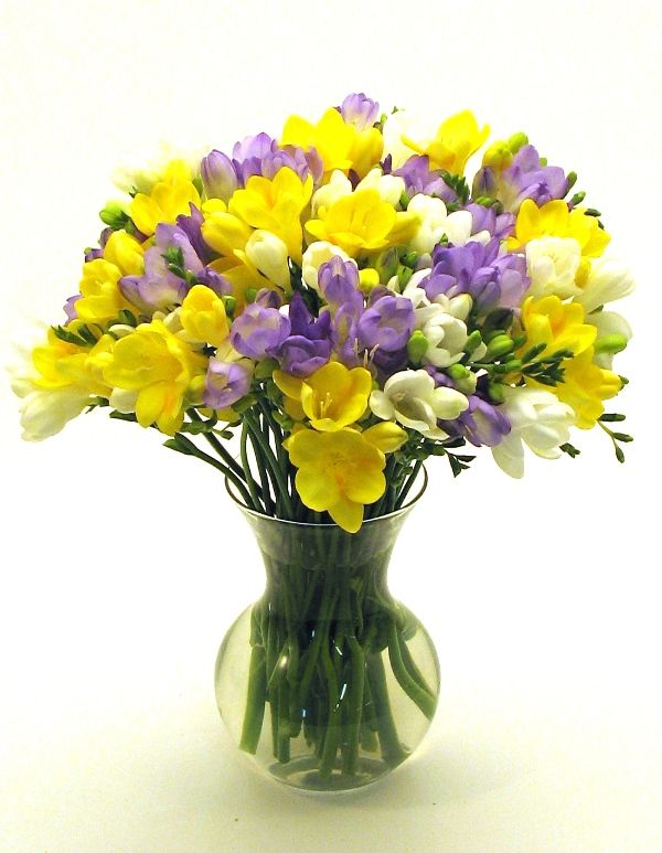 Freesia Innocence Trust Freesia Flowers Pretty Flowers Beautiful Flowers