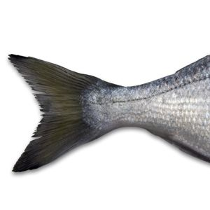 4cb113ea54a4db43b50cad4abbdb34bf - How To Get The Fish Smell Out Of The House