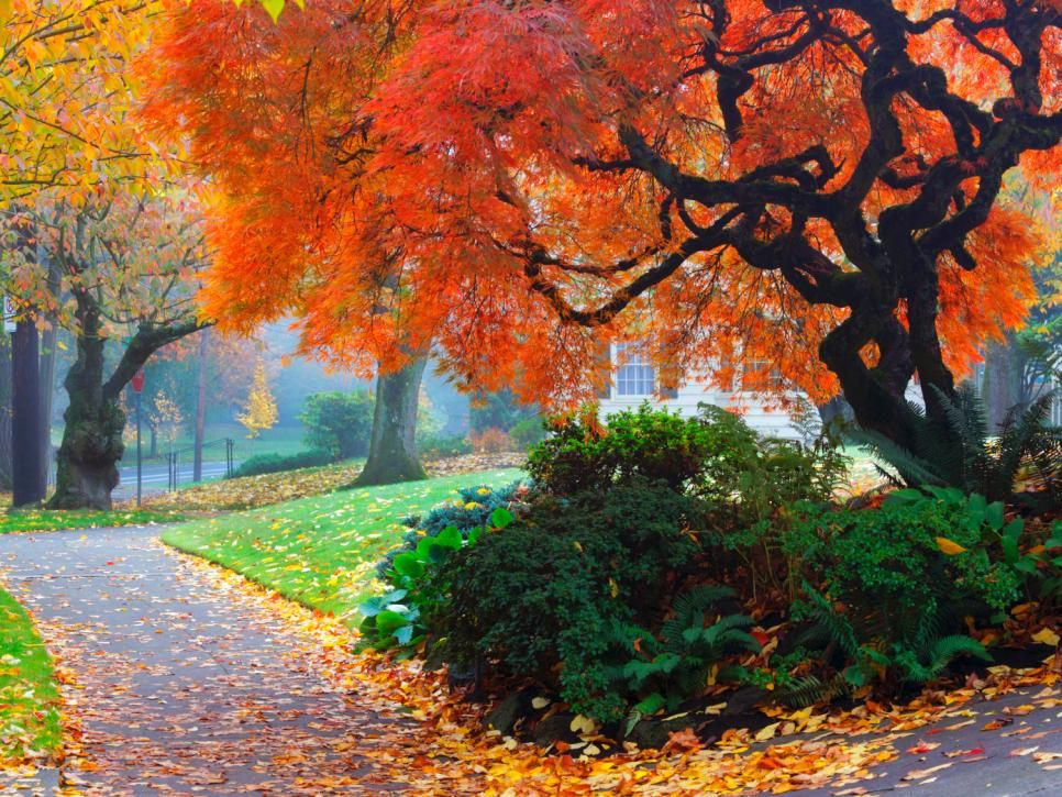 Fall Landscaping Ideas amazing color for the fall landscape   shrub, perennials and