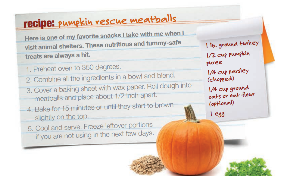 Pumpkin Rescue Meatballs Recipe From Veterinarian Dr Ernie Ward Fun For Fall And Healthy For Pets Too Pet Treats Recipes Dog Recipes Homemade Pet Treats