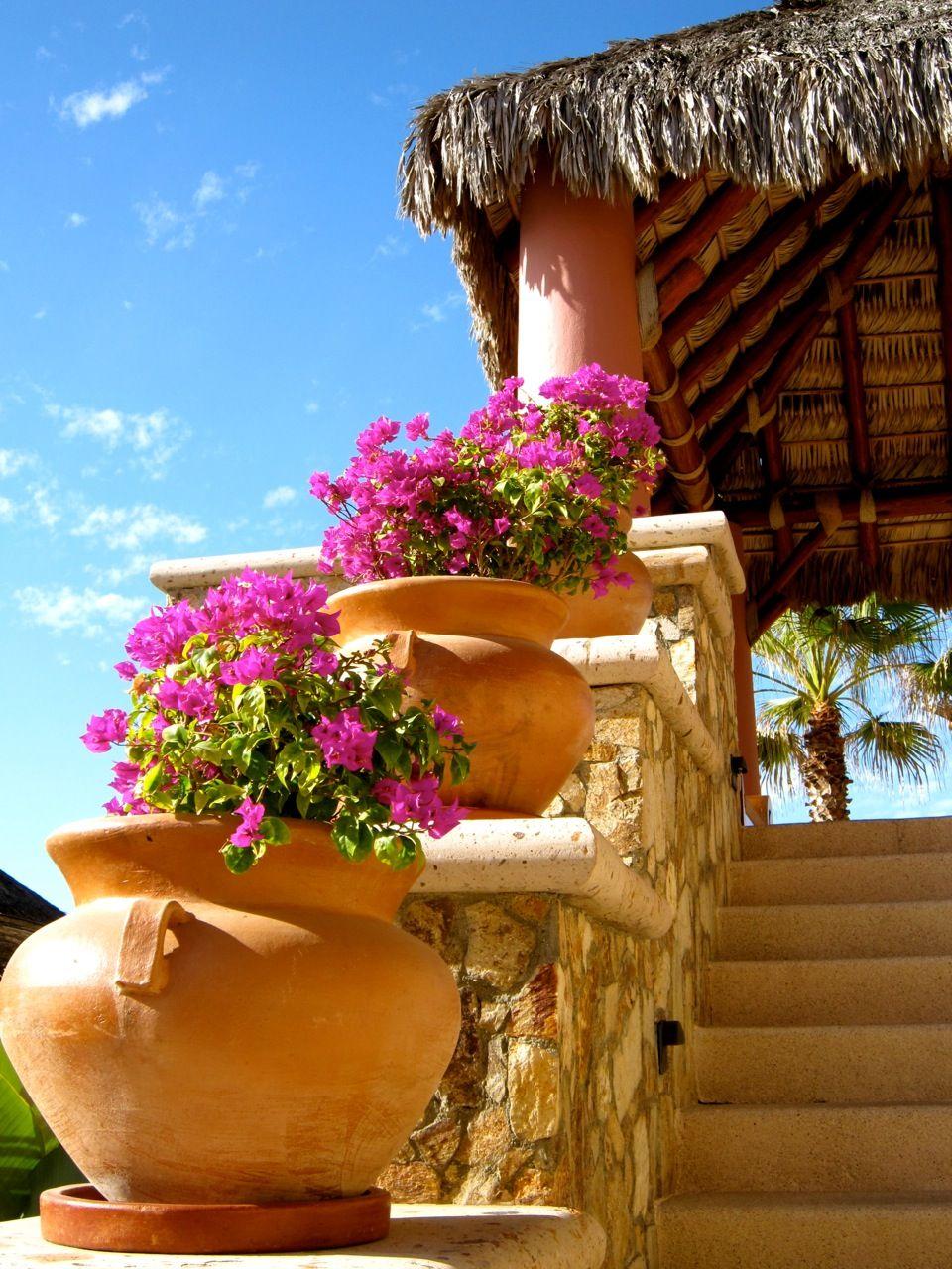 Sunshine Fresh Flowers Palapa Roof Huts Mexico