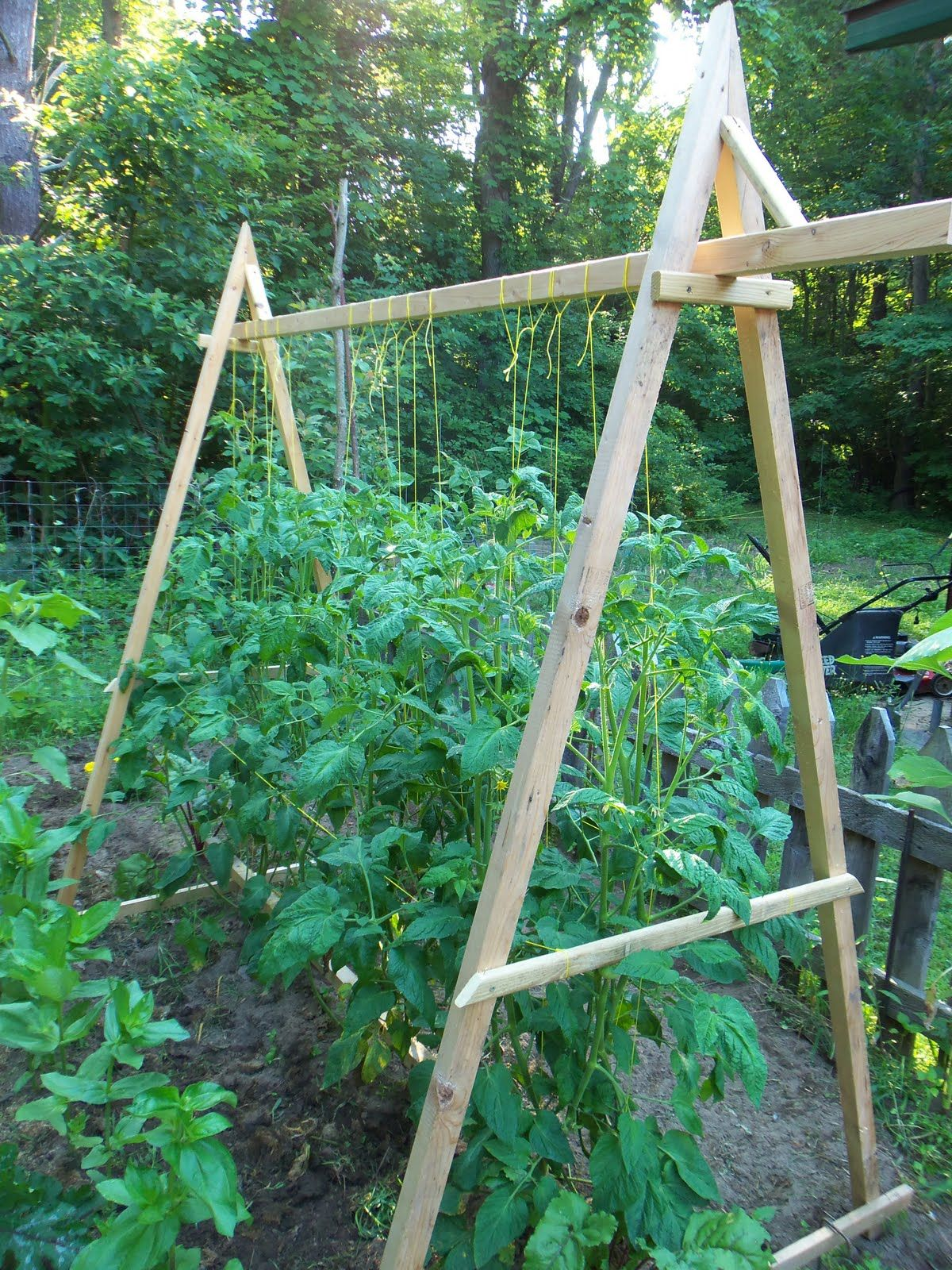tomato trellis- better than all those pesky wire cones
