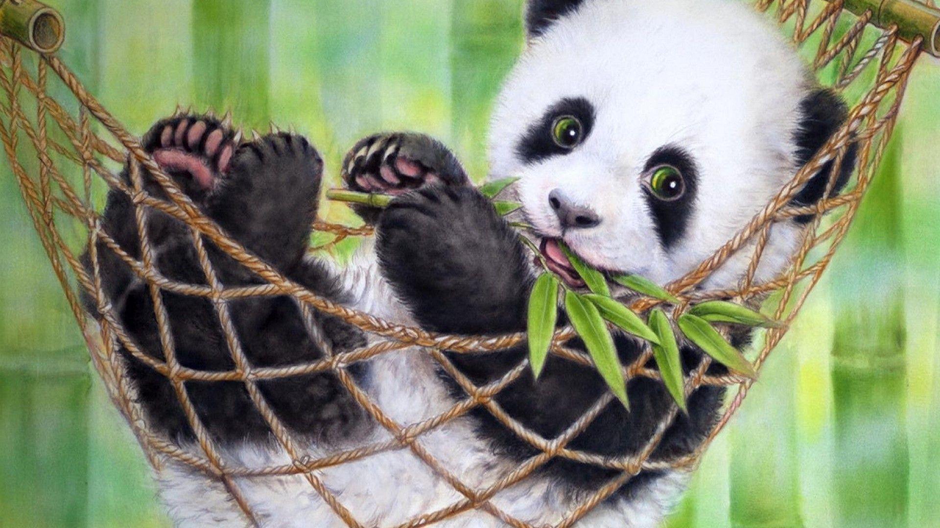 Cute Baby Panda Bear Wallpaper Best Hd Wallpapers Panda Bears Wallpaper Panda Bear Panda Wallpapers