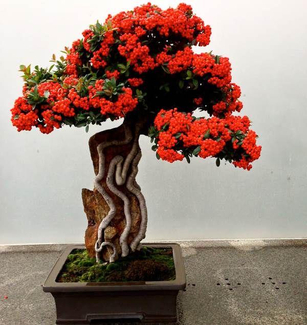 i bonsai piu belli