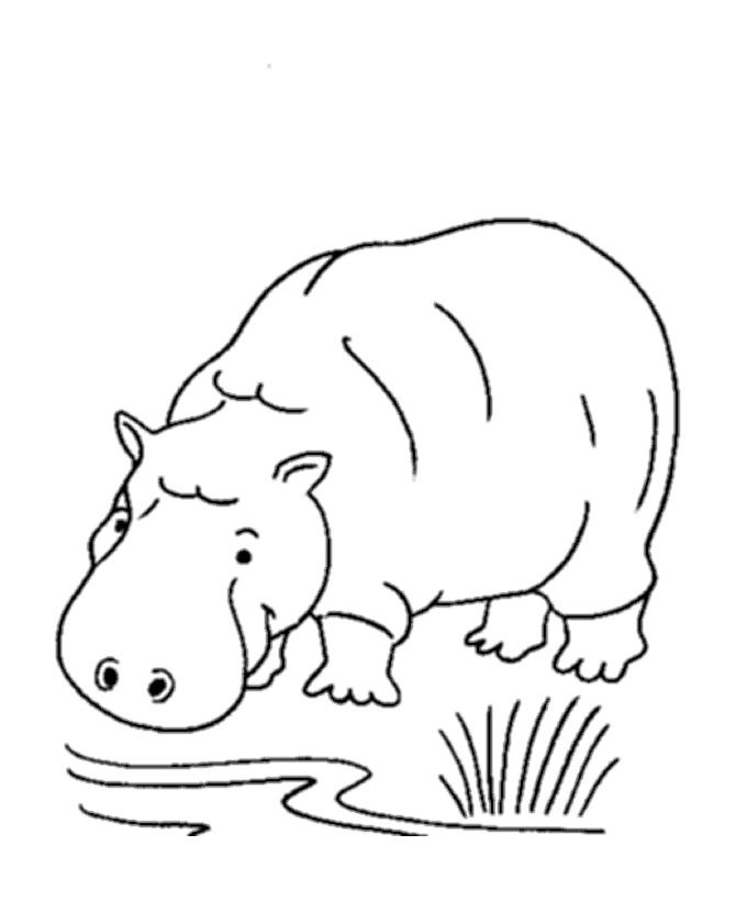Free Printable Hippo Coloring Pages For Kids Jungle Coloring Pages Zoo Animal Coloring Pages Animal Coloring Books