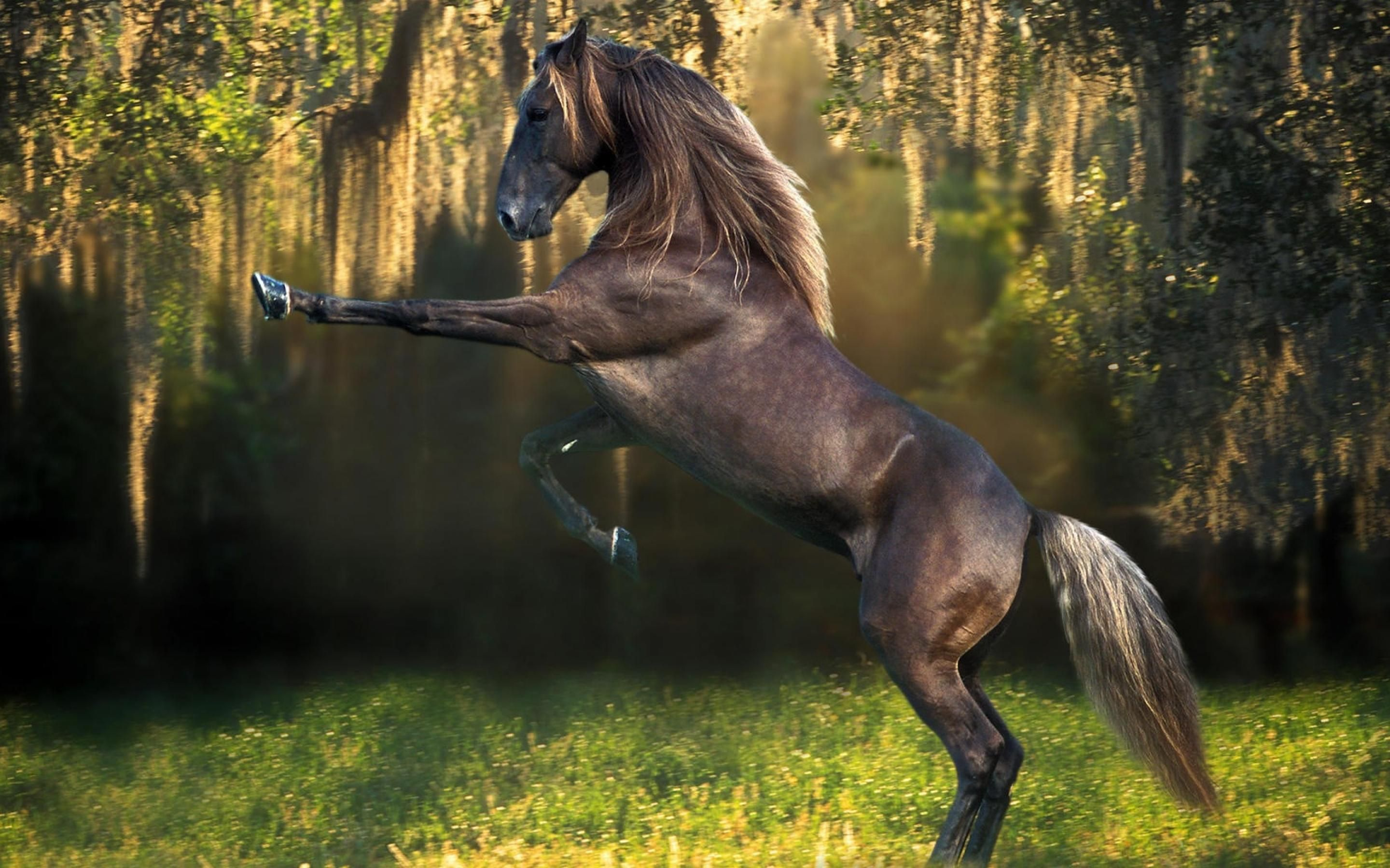 Amazing Wallpaper Horse Android - 4cb2d51398bbc5ee766bb7c1ed8c1440  Pictures_207588.jpg