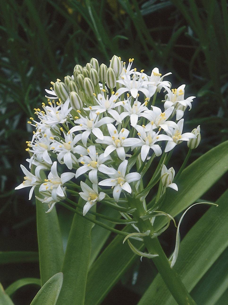 10 Bulletproof Plants Flowers Pinterest Flowers Plants And
