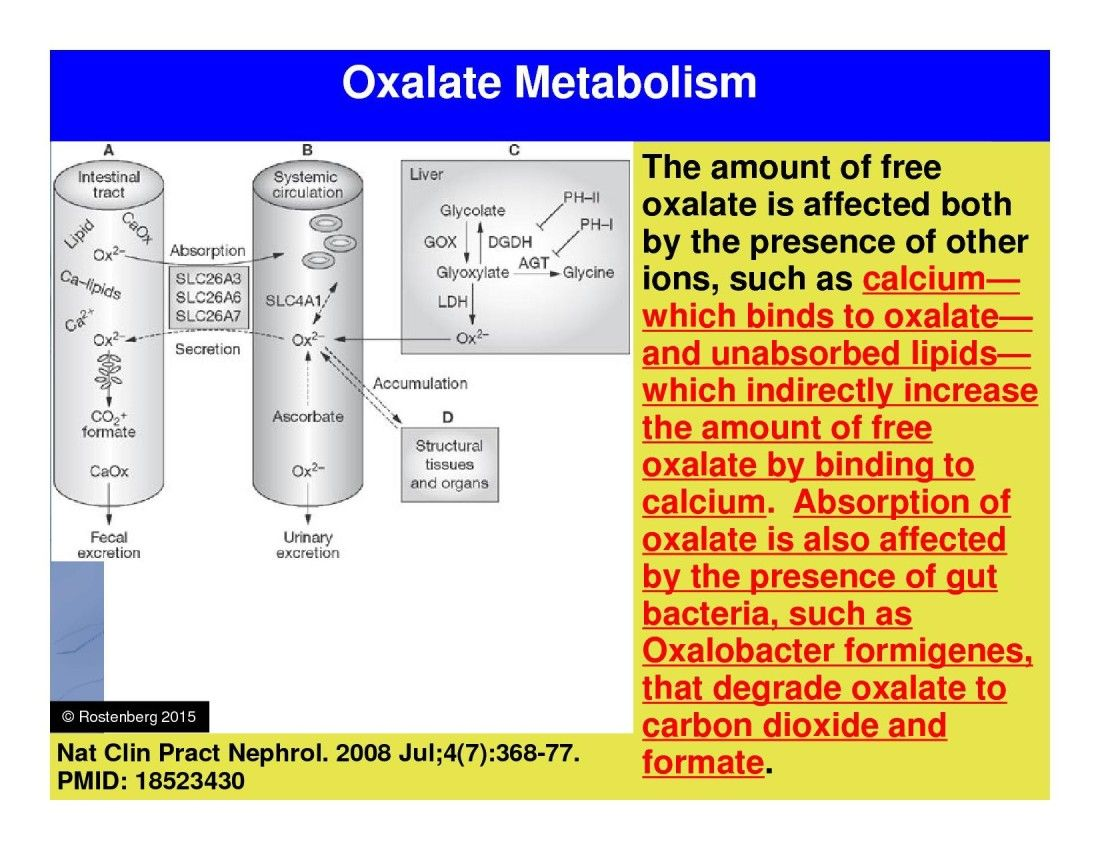 Oxalates and MTHFR Understanding the GutKidney Axis