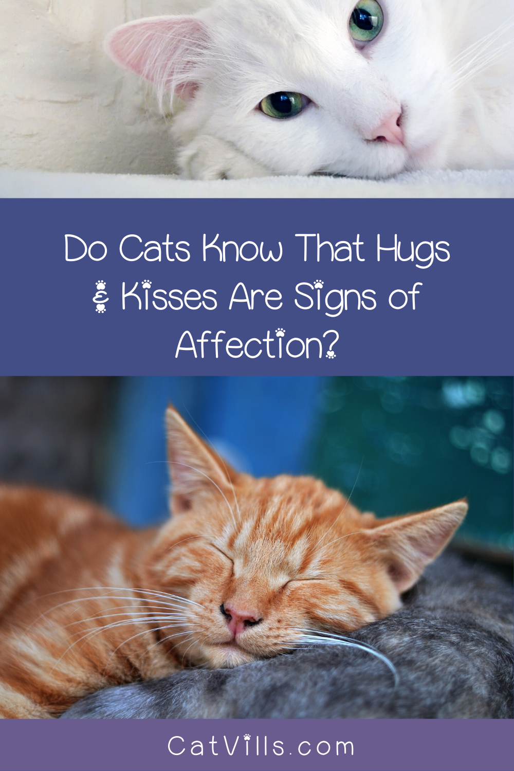 Do Cats Know That Hugs Kisses Are Signs Of Affection Catvills In 2020 Cat Behavior Pet Care Cats Cats