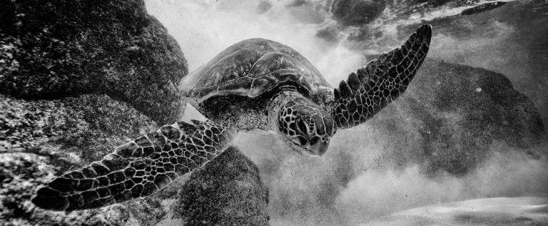 National Geographic lanza su concurso fotográfico versión 2013