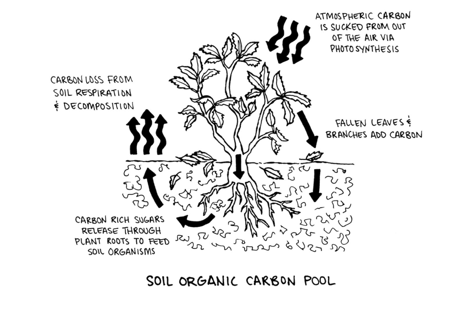 7 Plants For Your Regenerative Organic Garden